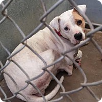 Adopt A Pet :: #284-16 Urgent! - Zanesville, OH