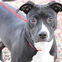 Adopt A Pet :: Jodie - Greensboro, NC