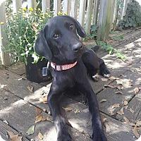 Adopt A Pet :: Sally - Matawan, NJ