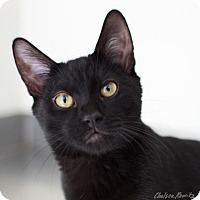 Adopt A Pet :: Batman - Canyon Country, CA