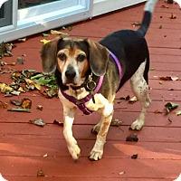 Adopt A Pet :: Gibson Marlboro - Waldorf, MD