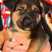 Adopt A Pet :: Cheyenne - Simi Valley, CA