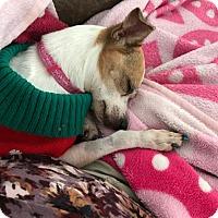 Adopt A Pet :: Princess - Windermere, FL