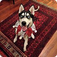 Adopt A Pet :: Hadley - Sugar Land, TX