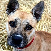 Adopt A Pet :: Maple - Lacon, IL