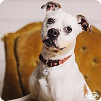Adopt A Pet :: Polka - Portland, OR