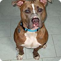 Adopt A Pet :: Raz - Framingham, MA