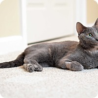Adopt A Pet :: Donna Troy - St. Louis, MO