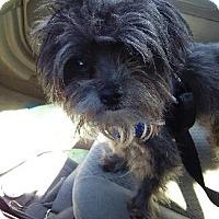 Adopt A Pet :: Moe - Chicago, IL