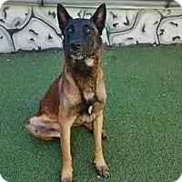 Adopt A Pet :: Ruckus - Cape Coral, FL