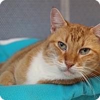 Adopt A Pet :: Chester - Sarasota, FL