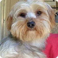 Adopt A Pet :: Madison - Crump, TN