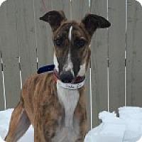 Adopt A Pet :: DC DEKE EM DAVID - Grandville, MI
