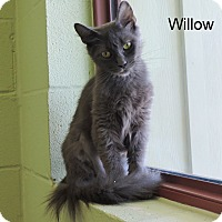 Adopt A Pet :: Willow - Slidell, LA