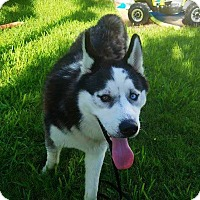 Adopt A Pet :: Kosmo - Clearwater, FL