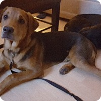 Adopt A Pet :: Waylon - Aurora, IL