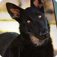Adopt A Pet :: RICO VON RICHTENBURG - Los Angeles, CA