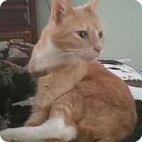 Adopt A Pet :: Toby - Apex, NC