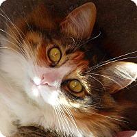 Adopt A Pet :: Lily AKA ZuZu - Los Alamitos, CA