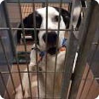 Adopt A Pet :: Haggard 4862 - Columbus, GA