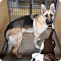 Adopt A Pet :: Spencer - San Jacinto, CA