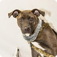 Adopt A Pet :: Lucy - Fayetteville, AR
