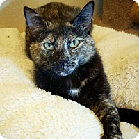 Adopt A Pet :: Daisy - Fredericksburg, TX