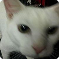 Adopt A Pet :: Casper - Warren, OH