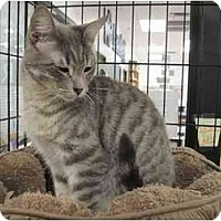 Adopt A Pet :: Wozy - The Colony, TX