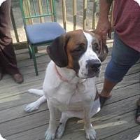 Adopt A Pet :: Bella - Lebanon, ME