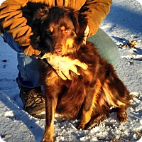 Adopt A Pet :: Buddy - Elk River, MN