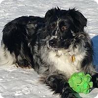 Adopt A Pet :: Odessa - Elk River, MN