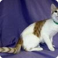 Adopt A Pet :: Kara - Powell, OH