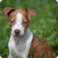 Adopt A Pet :: Ginnie - Miami, FL