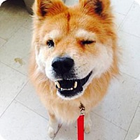 Adopt A Pet :: Tali - Visalia, CA