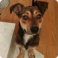 Adopt A Pet :: Tramp - New Orleans, LA