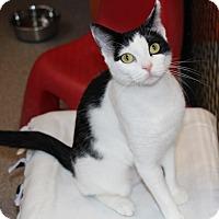 Adopt A Pet :: Sophie - Sarasota, FL