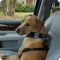 Adopt A Pet :: Banjo - Bristol, CT
