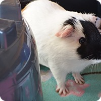Adopt A Pet :: Zero - Fullerton, CA