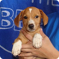 Adopt A Pet :: Sapphire - Oviedo, FL