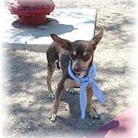 Adopt A Pet :: Chico - Las Vegas, NV