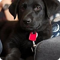 Adopt A Pet :: Vapor - Saskatoon, SK