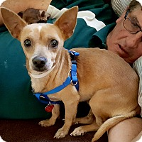 Adopt A Pet :: Trey - Andalusia, PA