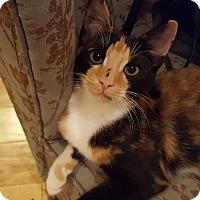 Adopt A Pet :: Chita - Homewood, AL