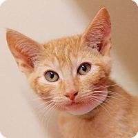 Adopt A Pet :: Earl - Red Bluff, CA