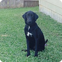 Adopt A Pet :: Addie - Spring, TX
