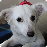 Adopt A Pet :: PEARL - Hurricane, UT
