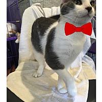 Adopt A Pet :: Floyd - Paducah, KY
