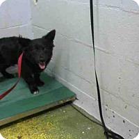 Adopt A Pet :: MAROON 5 - Atlanta, GA