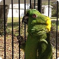 Adopt A Pet :: Nakita - Punta Gorda, FL